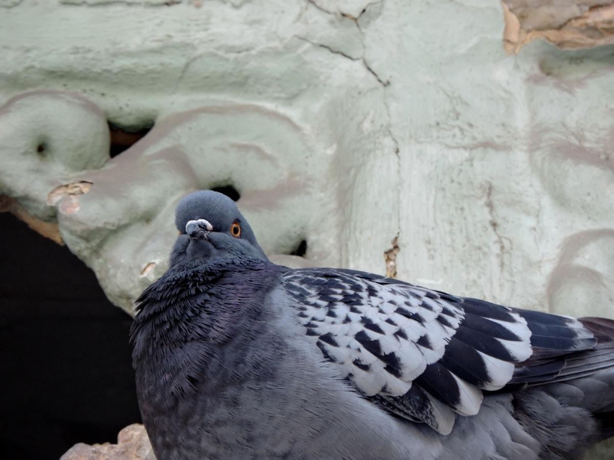 喙, 鸟, 野生动物, 性质, 鸽子, 鸽子, 动物, 羽毛