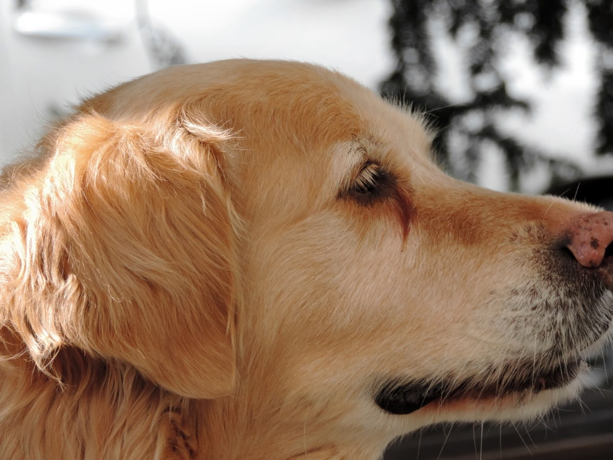 prijateljstvo, portret, pas, slatka, ljubimac, životinja, lovački pas, pas