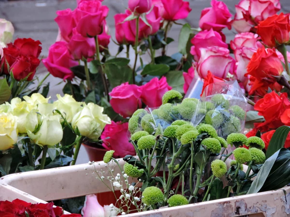 χλωρίδα, Κήπος, λουλούδια, τουλίπα, φυτό, μπουκέτο, ανθισμένα, λουλούδι