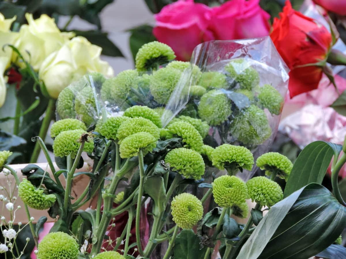 λουλούδι, λαχανικό, χλωρίδα, φύση, φύλλο, Κήπος, διακόσμηση, σεζόν