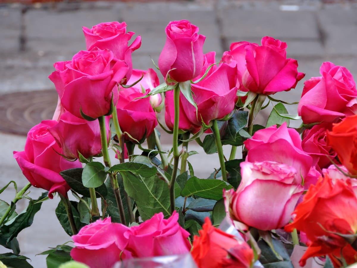 ดอกไม้, กุหลาบ, ทิวลิป, ช่อดอกไม้, ดอก, ดอกไม้, โรงงาน, กลีบ