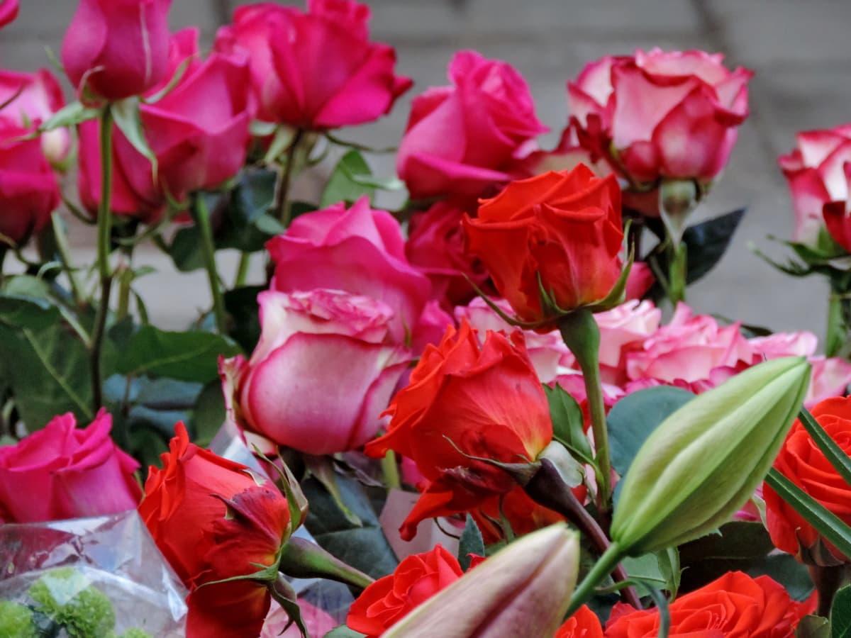 Natura, bukiet, Układ, flora, kwiat, Dekoracja, Róża, ogród
