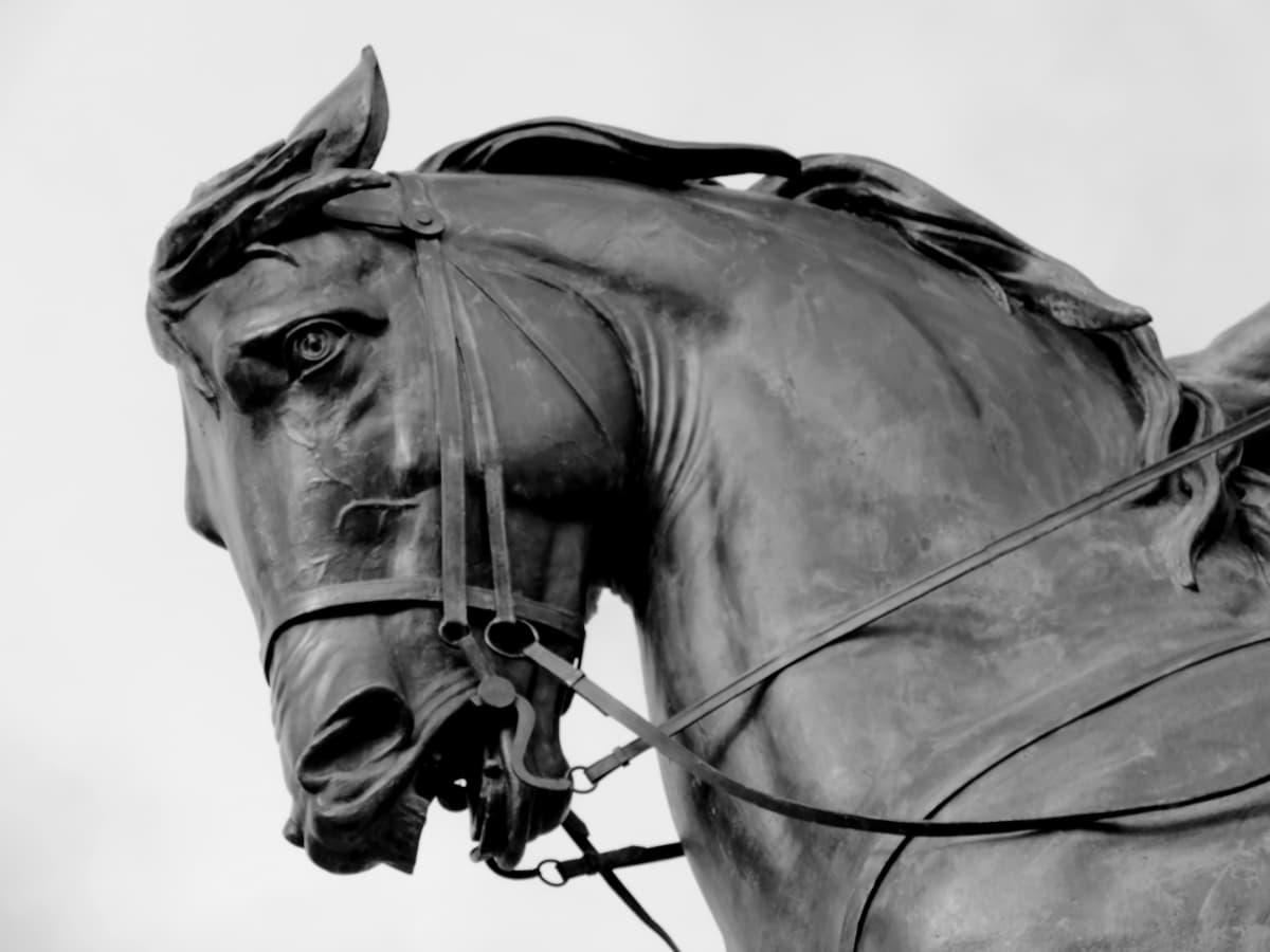 svart-hvitt, bronse, skulptur, hest, dyr, gården, Stallion, stående
