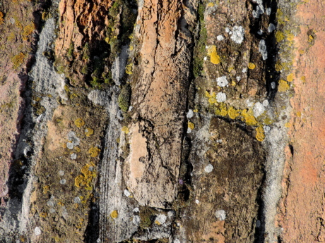 rough, old, texture, dirty, pattern, nature, abstract, decay