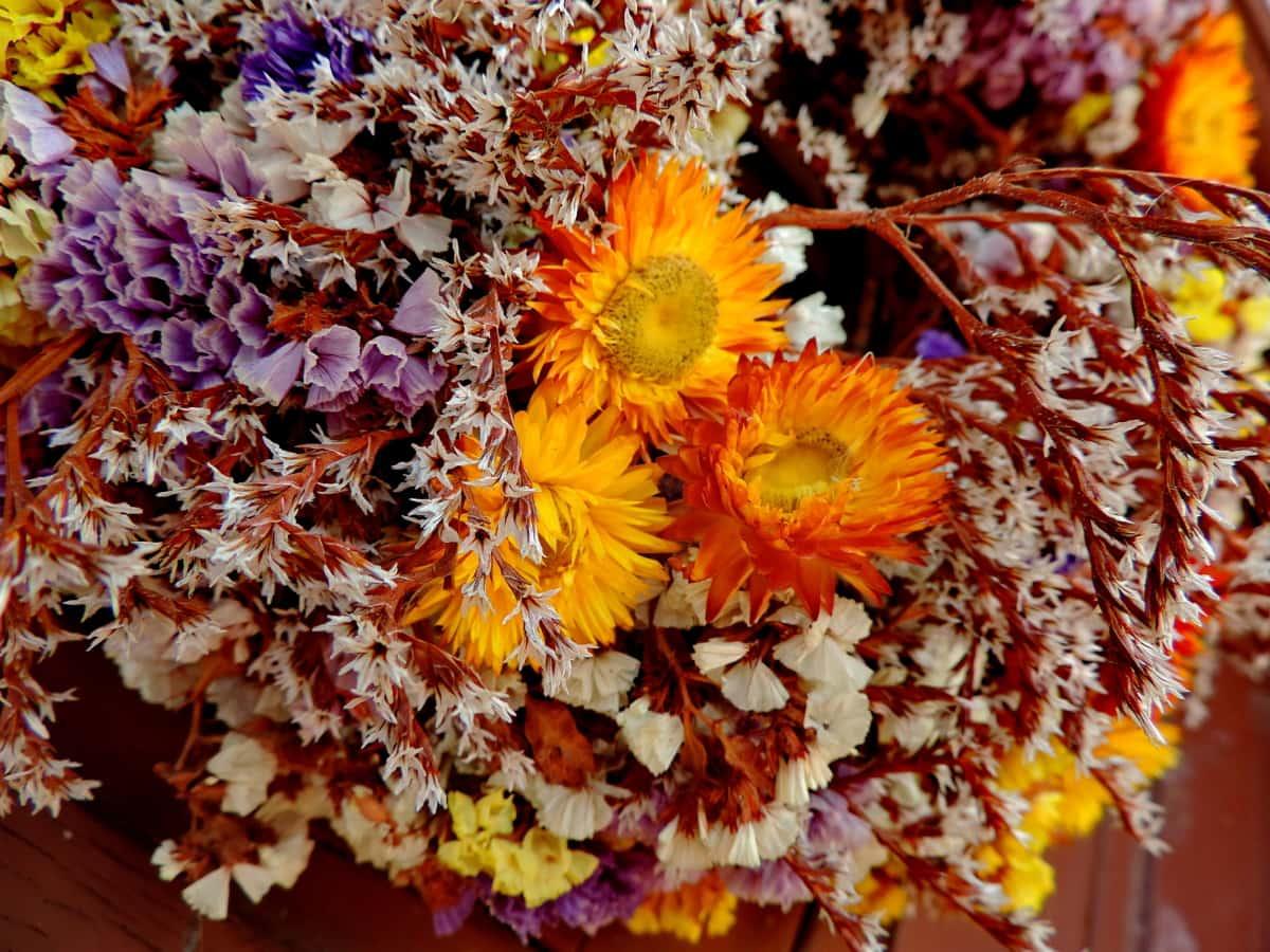 cvijet, žuta, buket, latica, biljka, priroda, flore, boja