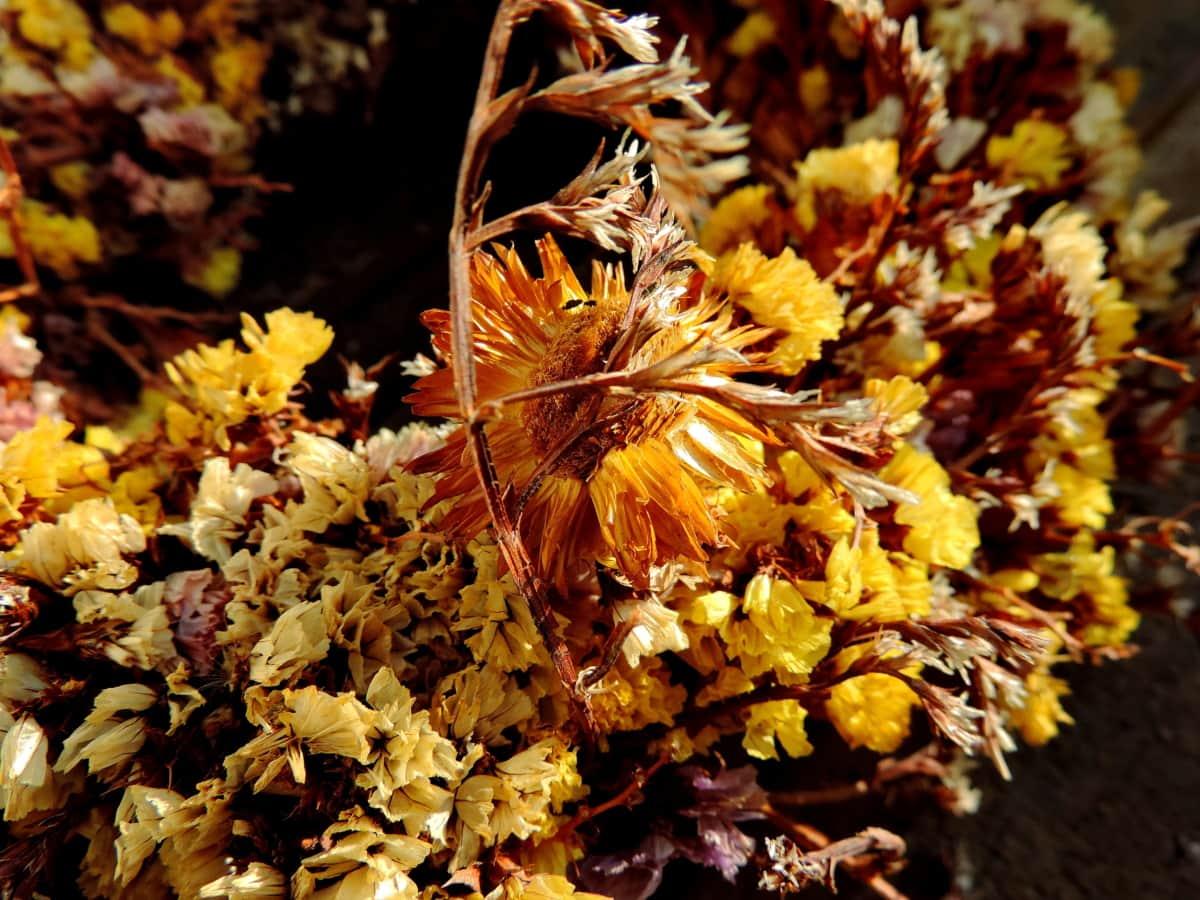 natura statica, iarbă, natura, floare, flora, frunze, culoare, premier-plan