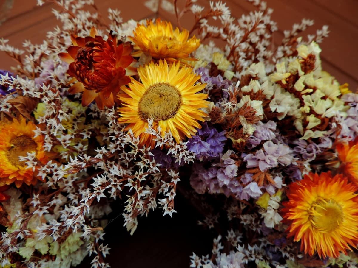 Dekoracja, sucha, Martwa natura, roślina, kwiat, żółty, Płatek, Latem