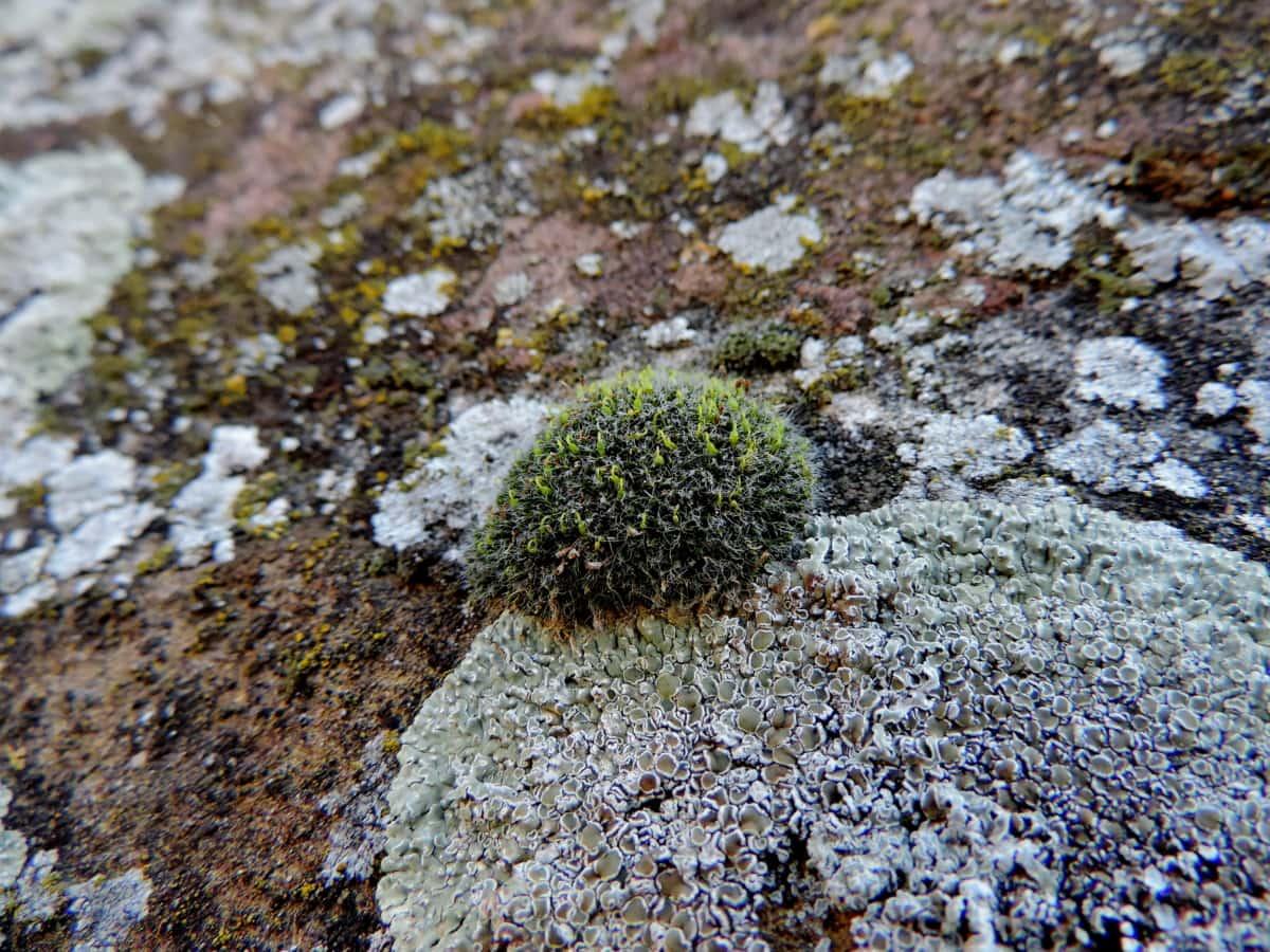 Natura, Mech, skała, na zewnątrz, kamień, porostu, zbliżenie, tekstury