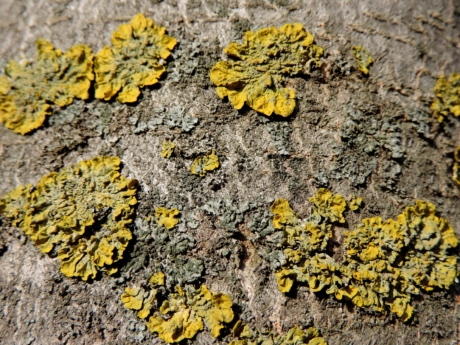 lichen, tree, nature, texture, herb, plant, yellow, fungus