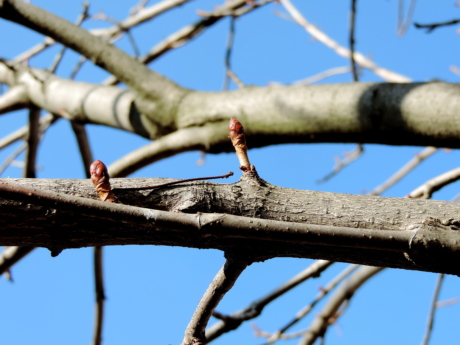 branch, tree, wood, nature, outdoors, environment, color, upclose