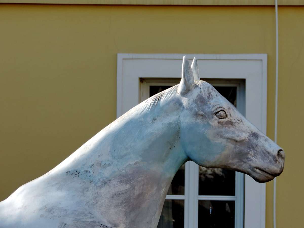 Tier, Pferd, Kavallerie, Natur, im freien, Skulptur, Kunst, Tierwelt