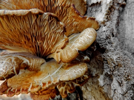 fungus, vegetable, mushroom, nature, wood, upclose, tree, texture
