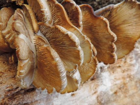 fungus, organism, mushroom, nature, wood, group, invertebrate, biology