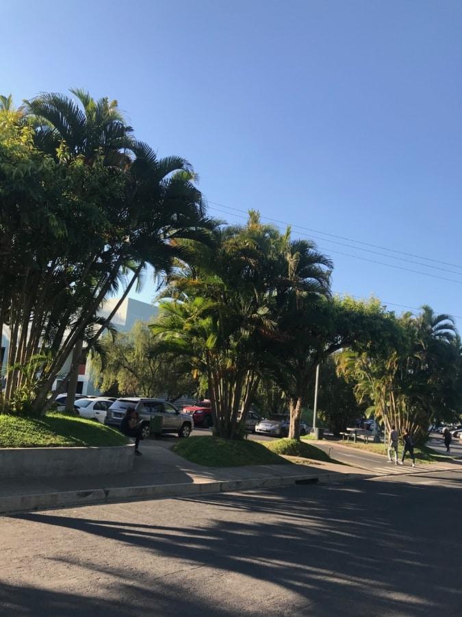 kokos, vej, træ, tropisk, palmu, landskab, parkere, gade