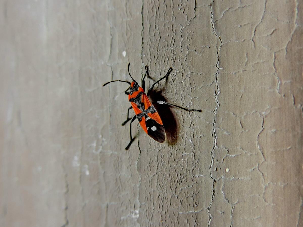 arthropod, buba, kukac, beskralješnjak, priroda, drvo, na otvorenom, biologija