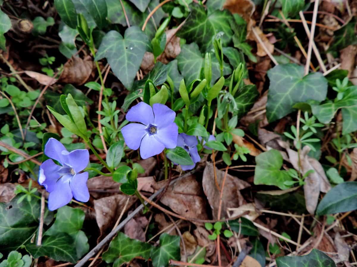 Οικολογία, έδαφος, άνοιξη, λουλούδι, Κήπος, φυτό, βότανο, φύση