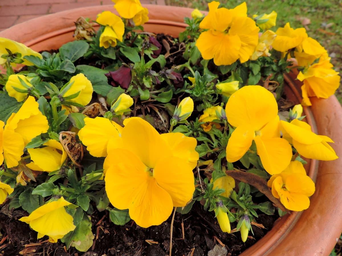 dekorace, Květináč, jaro, žlutá, květ, Příroda, závod, květ