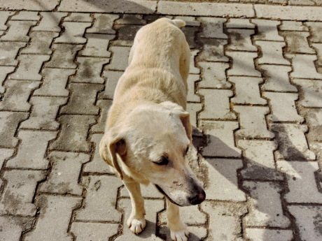 pavement, white, canine, hunting dog, puppy, dog, pet, old