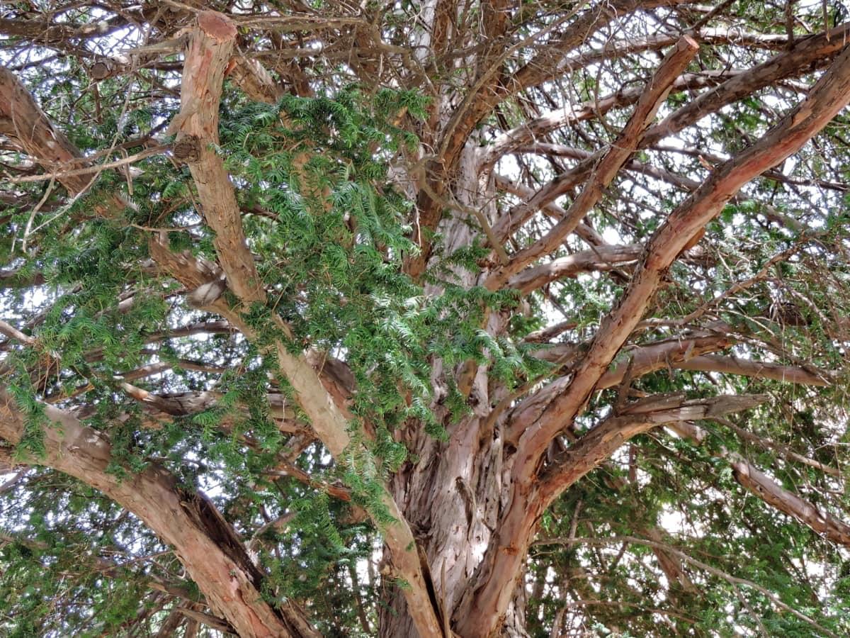 природата, кора, храст, дървен материал, дърво, гора, растителна, багажника