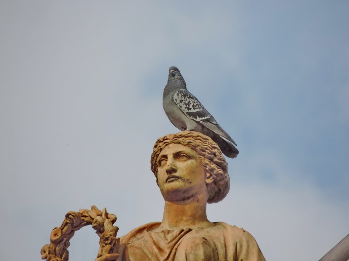 blue sky, bust, head, pigeon, art, religion, carving, statue