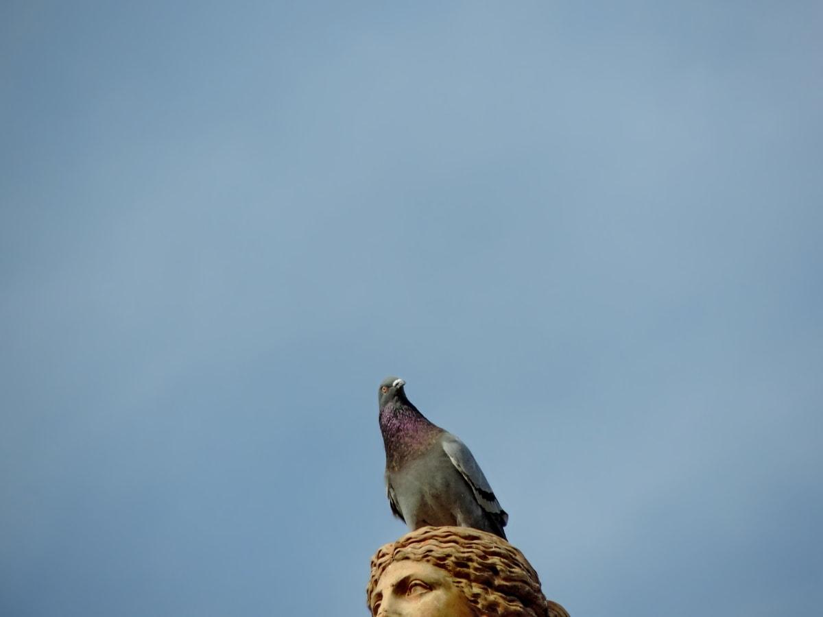 blå himmel, buste, skulptur, fugl, fjer, vilde, dyreliv, næb
