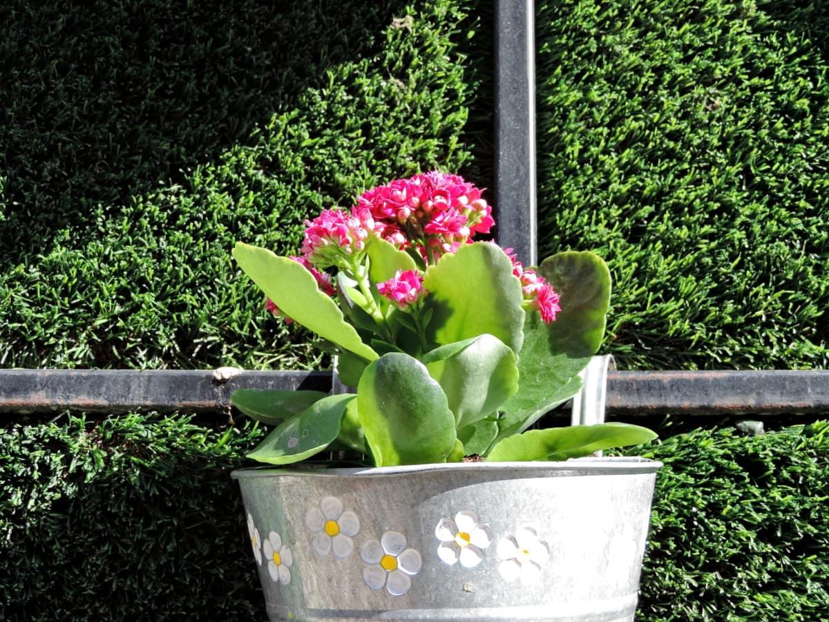 botânicos, decoração, jardinagem, ainda vida, flor, planta, flora, contêiner