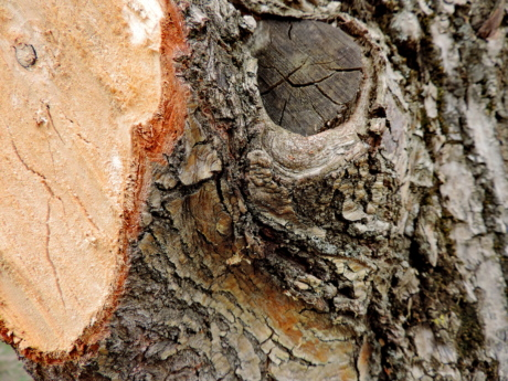 upclose, wood, texture, tree, rough, bark, nature, pattern