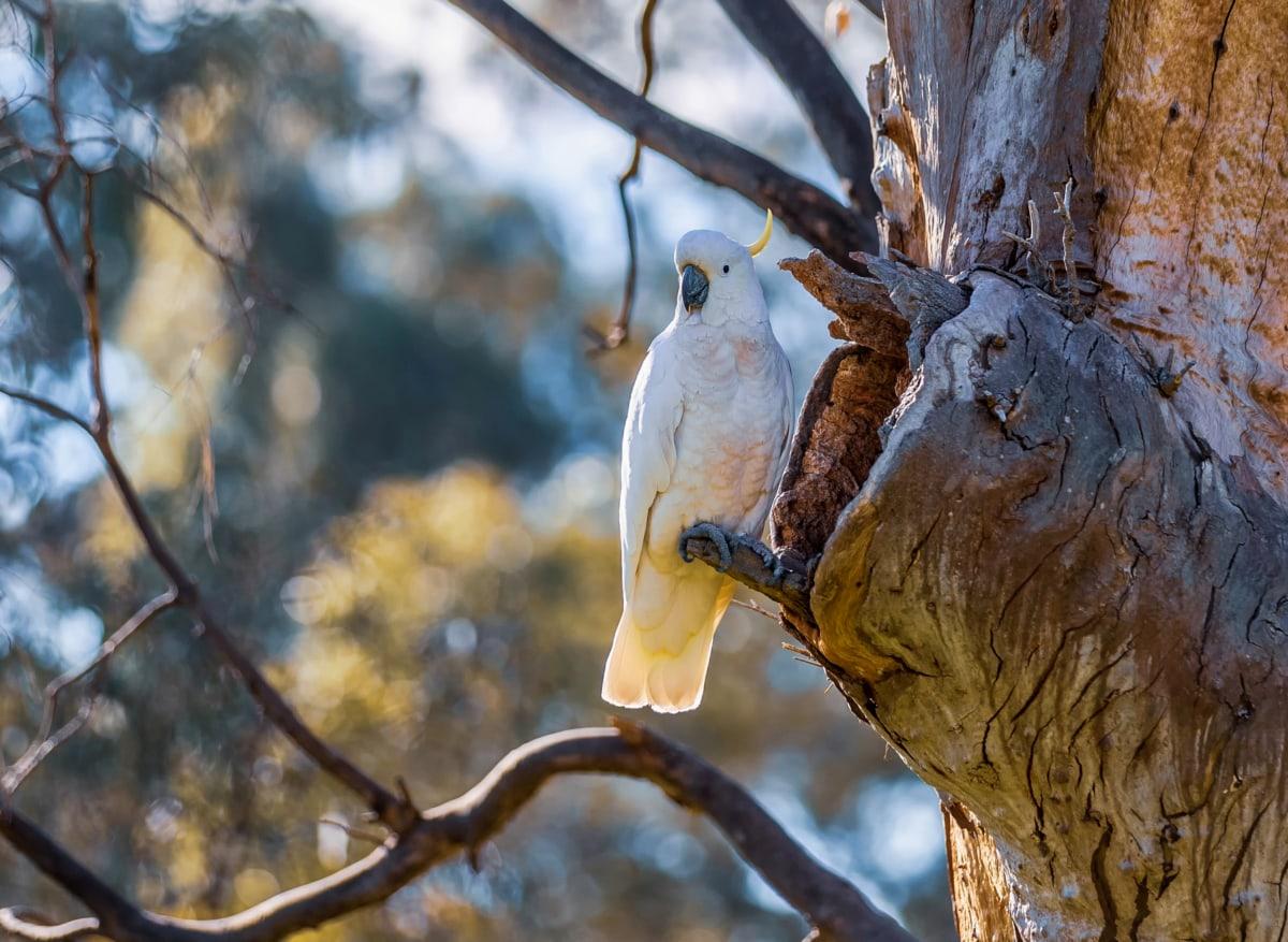 strom, príroda, papagáj, vták, drevo, vonku, voľne žijúcich živočíchov, zimné