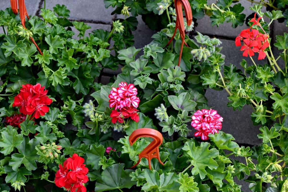 натюрморт, природата, растителна, градина, цветя, билка, флора, листа