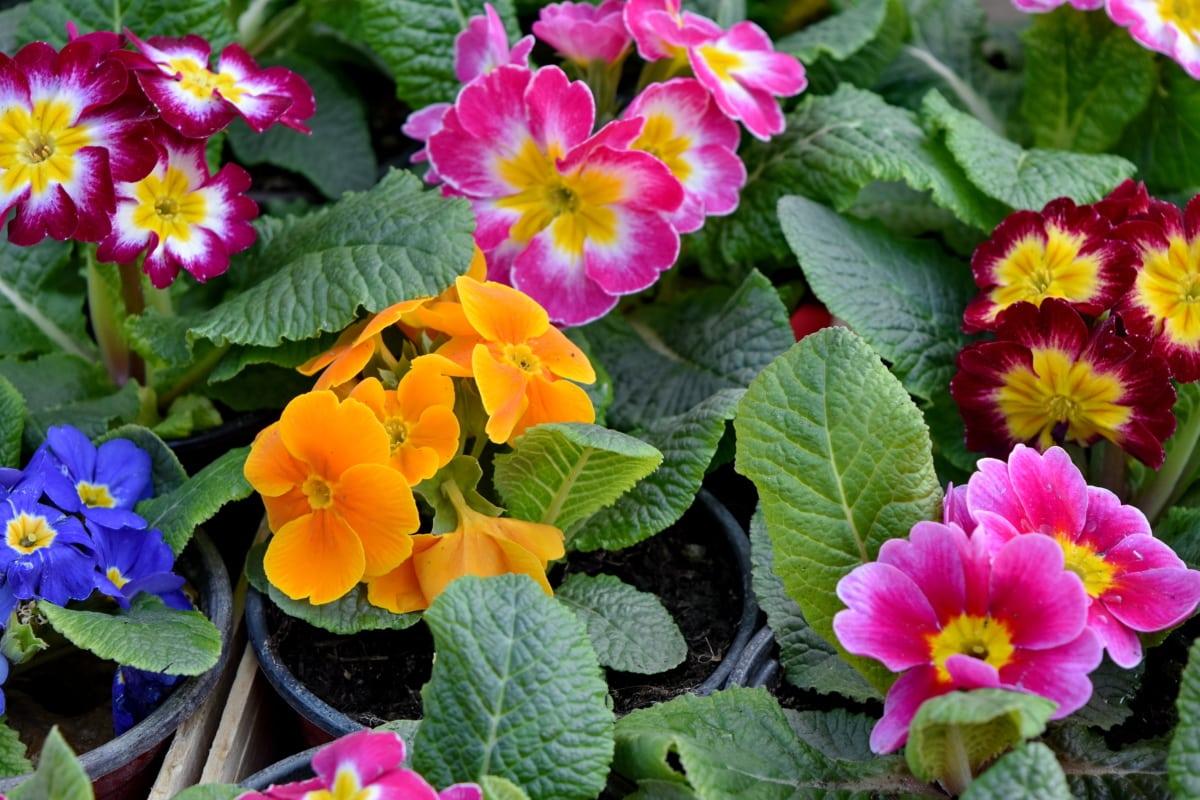 Imagine Gratuită Flori Frumoase Colorat Timp De Primăvară