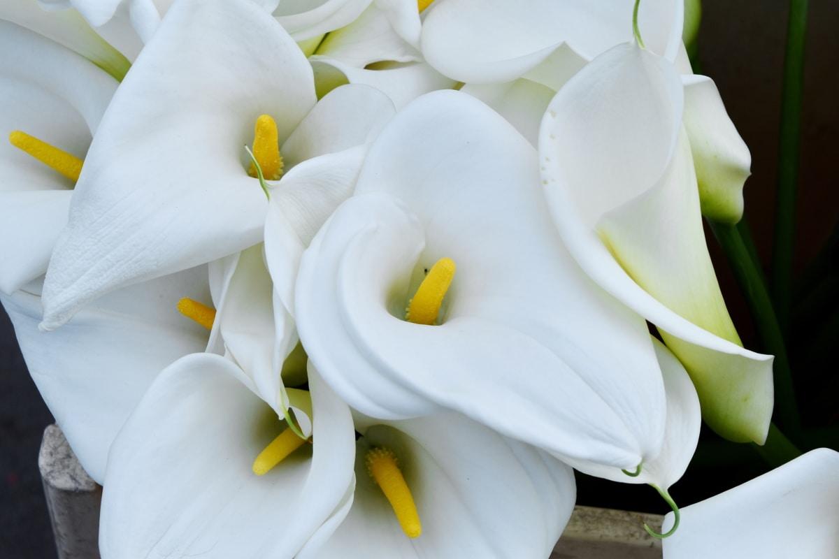 pestík, pyl, bílá, květ, lilie, Příroda, květiny, list