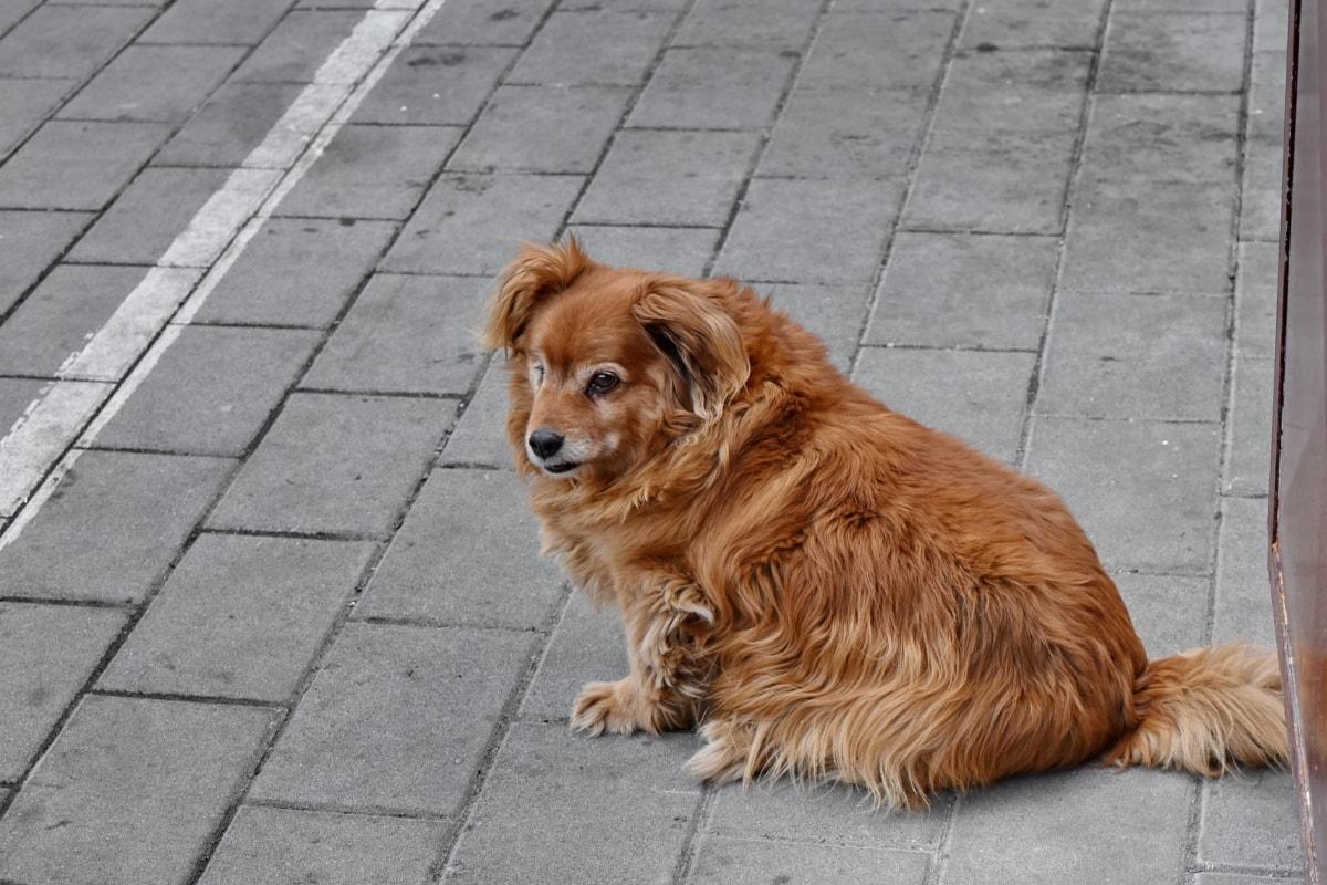 кучешки, кученце, куче, домашен любимец, сладък, животните, портрет, домашни