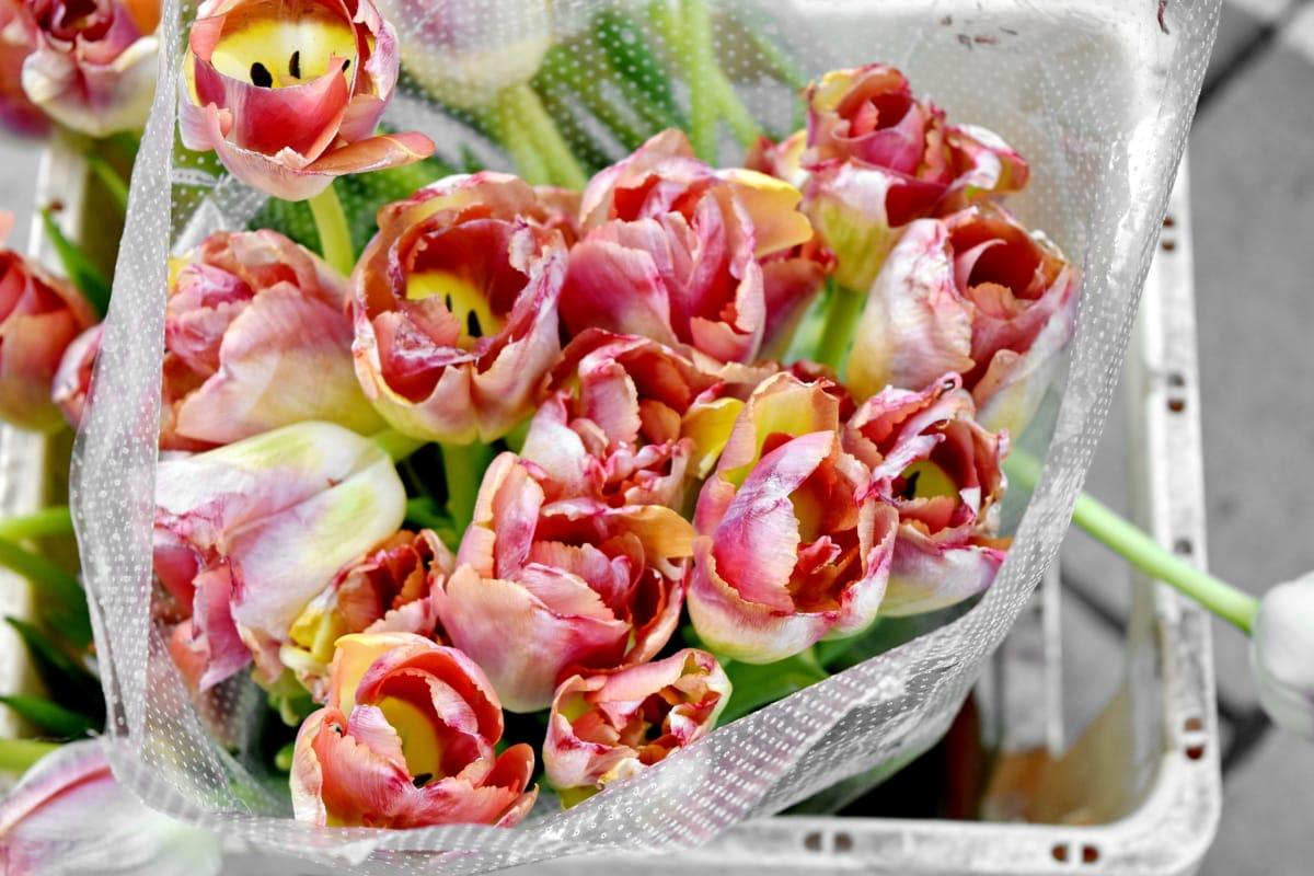 лалета, букет, декорация, Подреждане, листа, цвете, едър план, природата