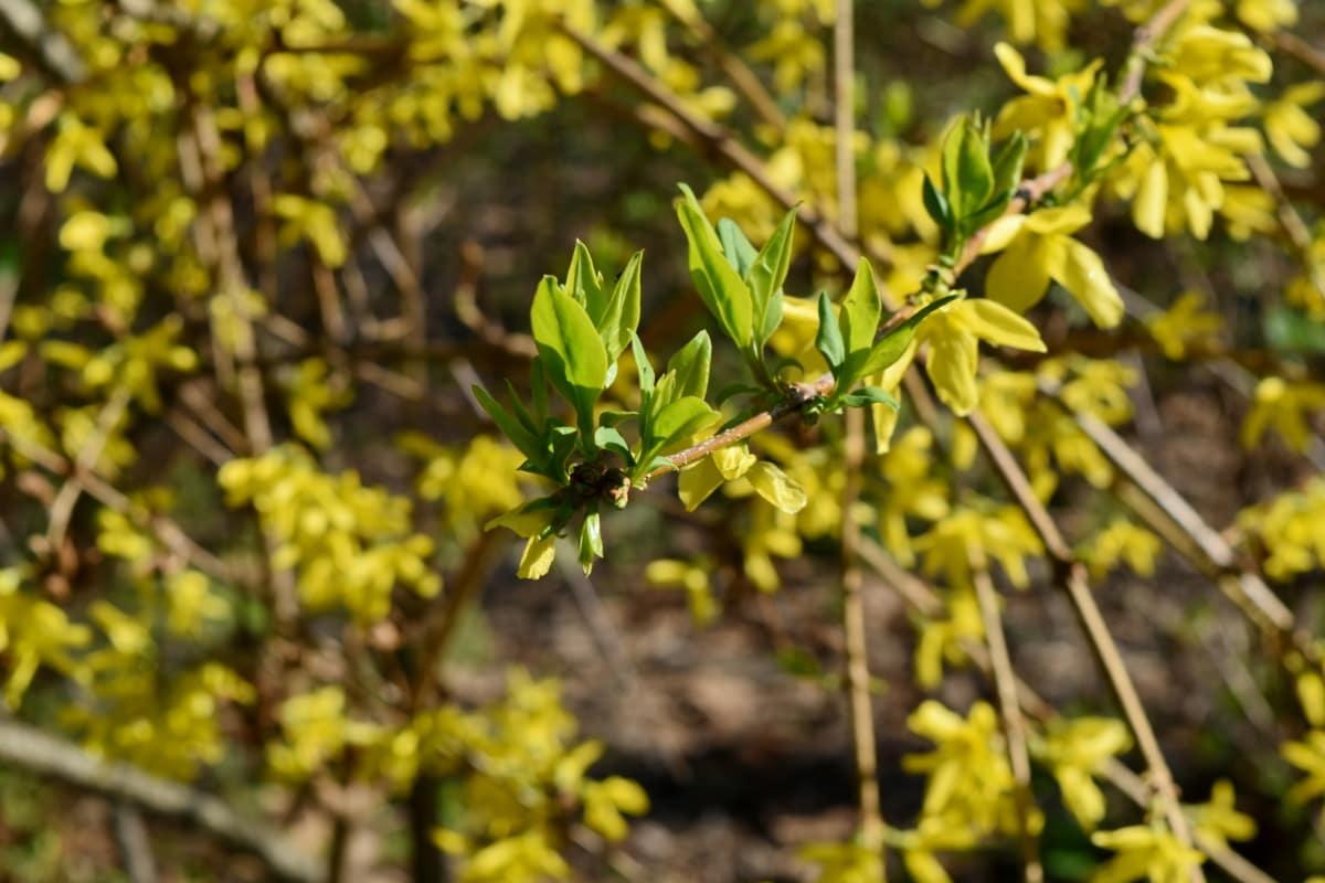 priroda, Sezona, grm, grana, flore, drvo, biljka, cvijet