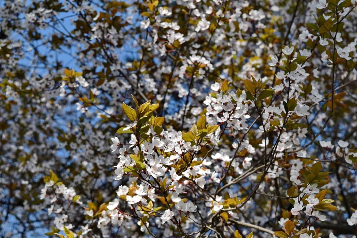 temporada, rama, naturaleza, flora, arbusto, árbol, flor, planta