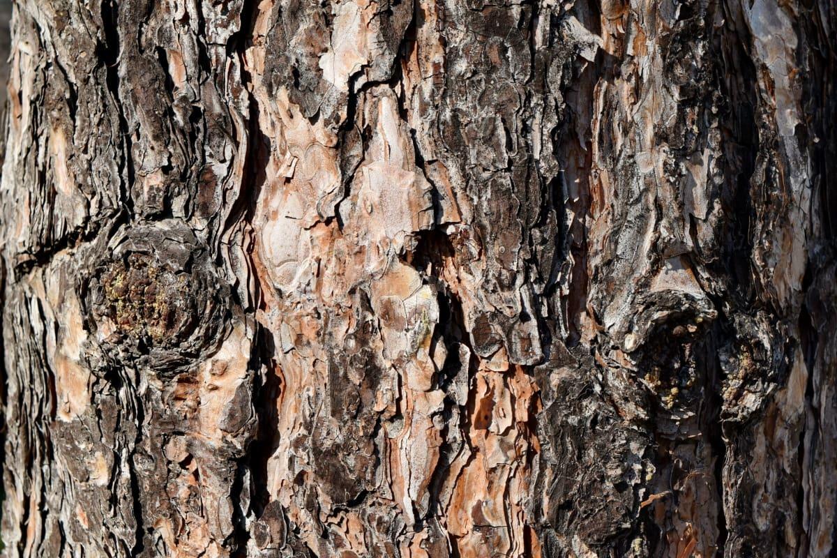 tekstura, drvo, drvo, kora, grubo, površina, priroda, hrast