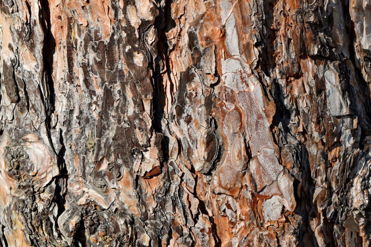 grubo, uzorak, površina, kora, tekstura, drvo, materijal, drvo