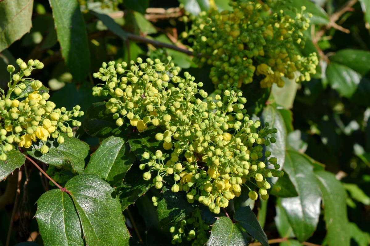 природата, листа, растителна, храст, флора, дърво, цвете, градина