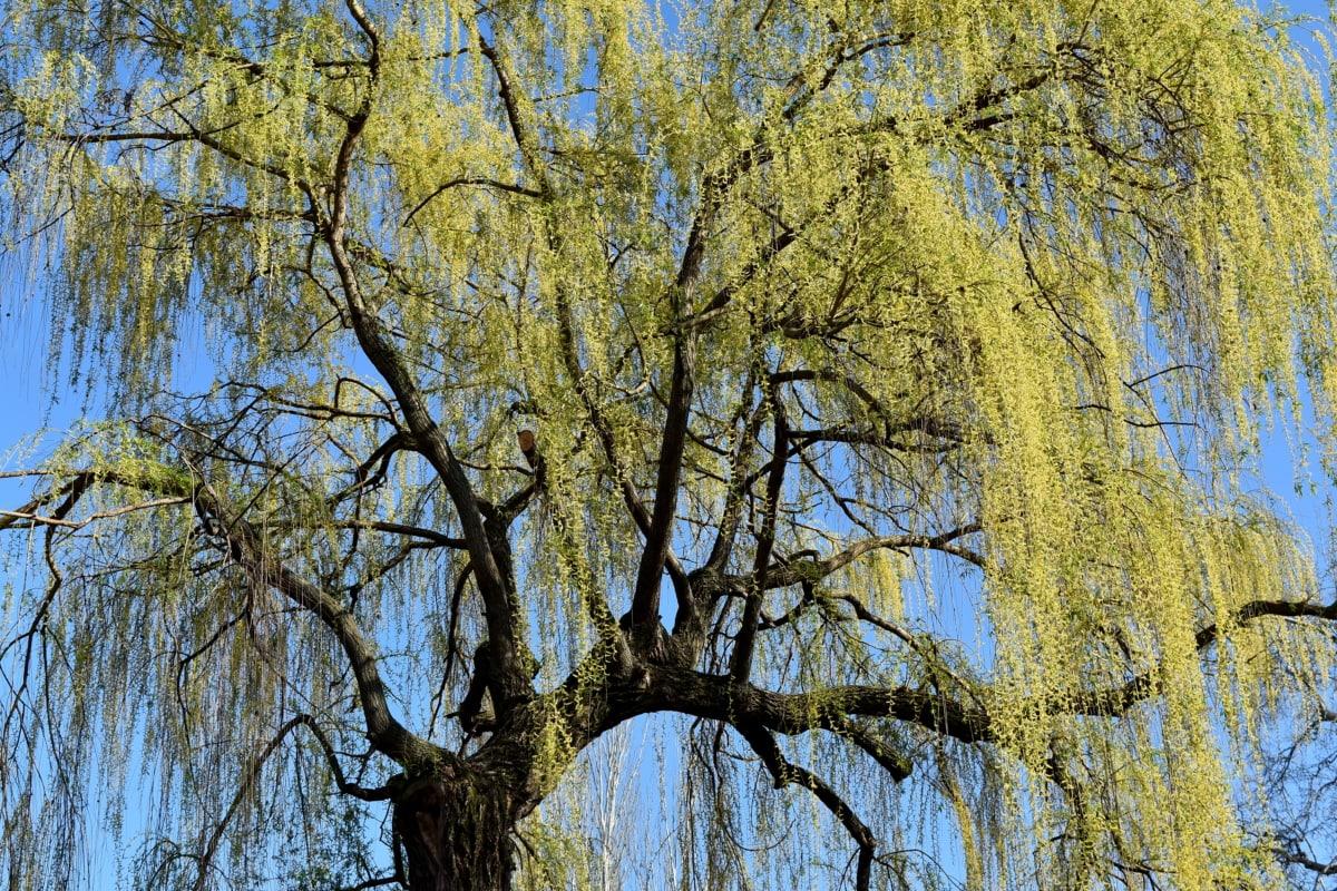 træ, landskab, træ, sæson, gren, scene, natur, parkere