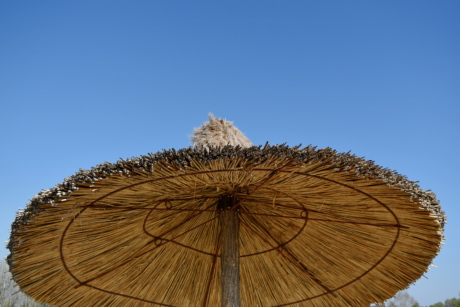 parasol, sunshine, wood, nature, summer, wooden, outdoors, landscape