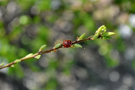 ladybug, spiderweb, leaf, branch, plant, nature, tree, outdoors