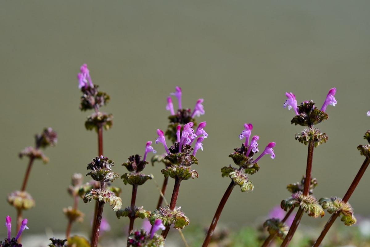 cvijet, priroda, vrt, cvijet, biljka, biljka, polje, boja