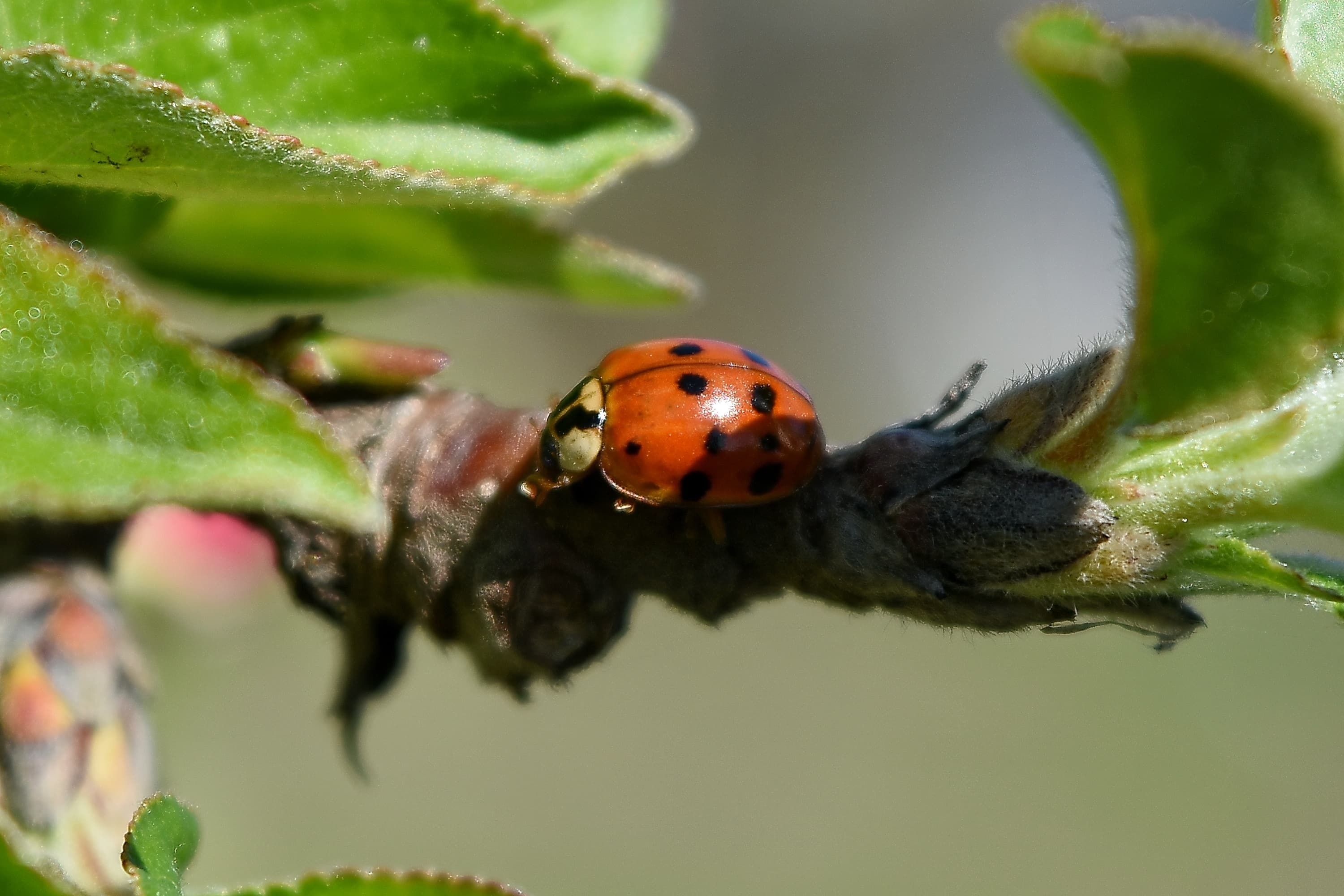 Free Picture: Ladybug, Garden, Plant, Spring, Bug, Insect ...