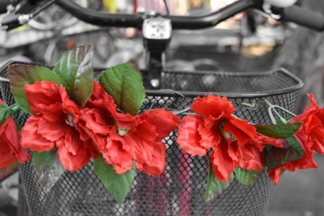 basket, bicycle, steering wheel, flower, leaf, outdoors, garden, nature