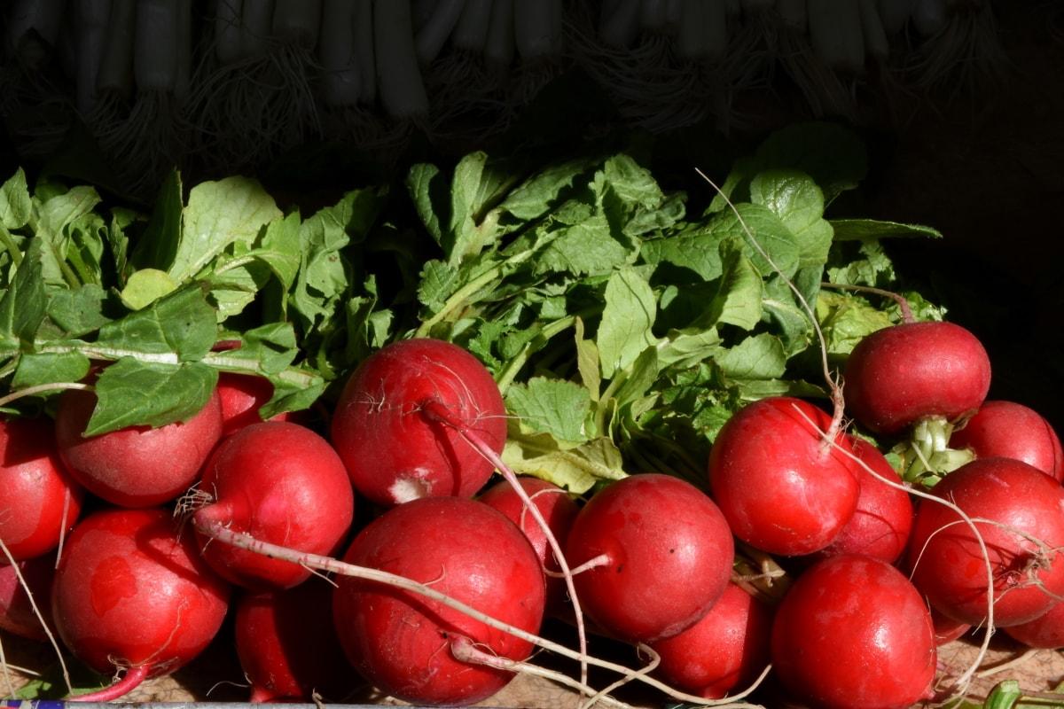 ραπάνι, τροφίμων, λαχανικό, λαχανικά, βότανο, φύλλο, υγεία, διατροφή