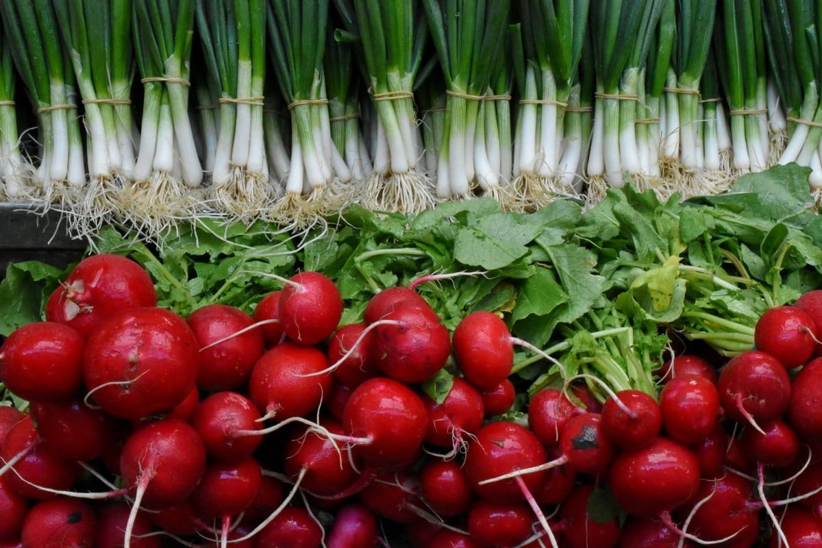 wortel, voedsel, radijs, gezonde, vers, plantaardige, groenten, kruid