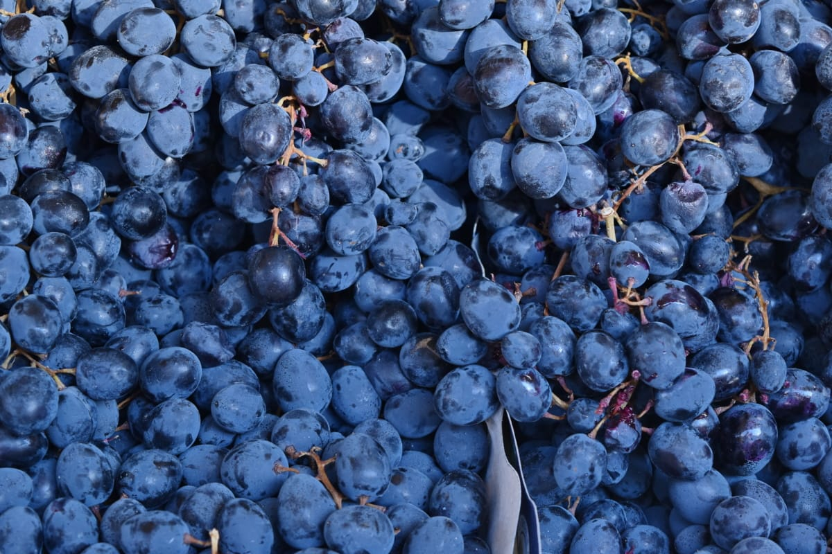 organique, violet, raisin, les raisins, vin, fruits, nature, à pied