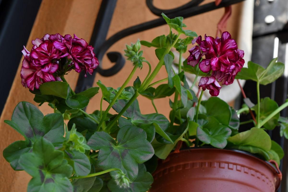 cvijeće, mrtva priroda, priroda, biljka, cvijet, list, vrt, ljeto