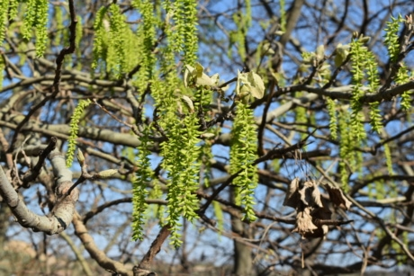 branches, spring time, tree, flora, leaf, forest, nature, plant