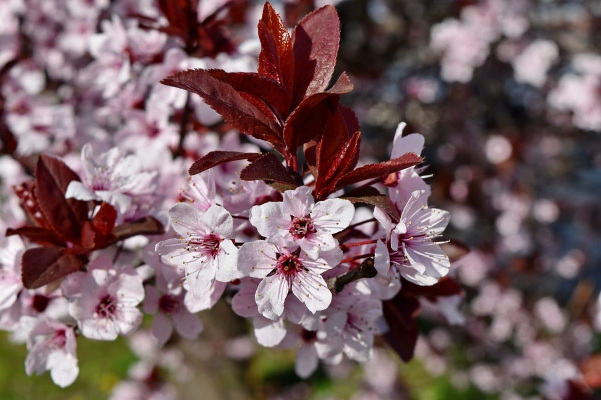 flora, shrub, flower, blossom, branch, plant, tree, nature